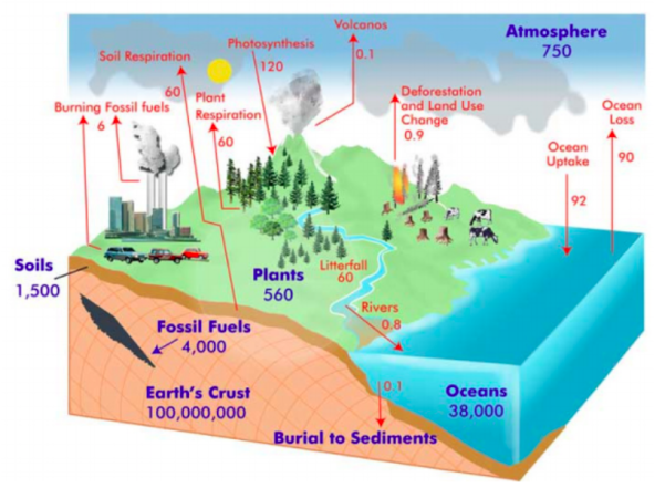 Environmental impacts of climate change     Carbon        GeographyCaseStudyCom